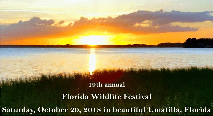 Florida Wildlife Festival